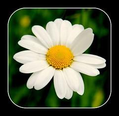ein wunderschnes Wochenende wnsche ich (Heide (vorher roeschen56)) Tags: flowers blumen masterphotos takenwithlove lovelyflickr