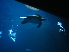 """The Monterey Bay Aquarium • <a style=""""font-size:0.8em;"""" href=""""http://www.flickr.com/photos/109120354@N07/11042945996/"""" target=""""_blank"""">View on Flickr</a>"""