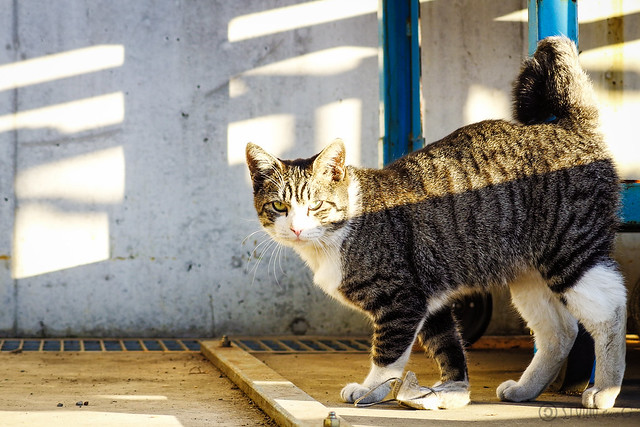 Today's Cat@2013-12-01