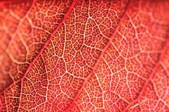colorado (patrick.raymond55) Tags: macro patrick raymond mygearandme flickrstruereflection1