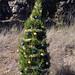 Trees_of_Loop_360_2013_285