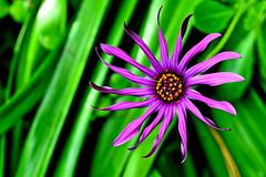 2013-09-21_12-44-40 (J Rutkiewicz) Tags: flower garden flora kwiaty ogród