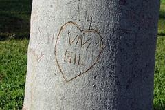 Amor ([Gil Mouse]) Tags: tree love message amor árvore mensagem