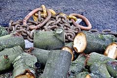 Aftermath (Darkroom Daze) Tags: greatbritain england london moss log rust timber chain bark lichen tackle dulwich horsechestnut hernehill westdulwich sawn londonboroughoflambeth engineeringwork rosendaleroad