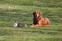 rio and lilly (sandradiroll) Tags: red dog rot animal cat outdoor sunny hund together katze sonnig tier dogandcat zusammen drausen hundundkatze