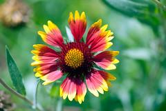 Nature's multicolorism
