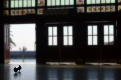 Haydarpaşa'nın son sakinleri... (Ali Enes Mollaoğlu) Tags: life new city travel sea people bird turkey photography freedom nikon alone pigeon türkiye free istanbul fresh traveller türkei 1855 dslr deniz hayat kuş haydarpaşa kadıköy yaşam yalnız insanlar fotoğraf seyahat turecko seyyah şehir birdoffreedom konstantiniyye alienes d5100 alienesmollaoğlu alienesm güveecin