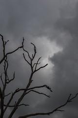 Sunbury (wtewg) Tags: tree creek moody stormy victoria atmospheric jacksons sunbury