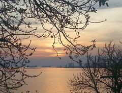 SAMSUNSET (NIKOZAR (Nicola Zaratta)) Tags: sunset tramonto albero puglia taranto seasunset tramontosulmare