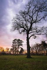 Coming alive (CreArtPhoto.ro) Tags: landscapephotography tree romania bucharest cer widelens nature apus mogosoaia sunset park albastru nori copac verde