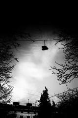(18/21) Project ''Lviv overhead'' (nerapavlo) Tags: filmisnotdead lvivoverhead lviv плівка city lwow lemberg чб lvov чбфото leopolis ukraine львів україна bnw monochrom noir film filmphotography analog analogphotography 35mm 35mmfilm kodak project monochrome analogue kodakfilm urban bw sky lines