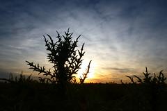 PASION POR EL CAMPO (kchocachorro) Tags: sun sunset landscape horizon