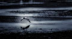 the search... (JDS Fine Art Photography) Tags: bird egret ocean beach inspirational sunrise waterscape oceanscape landscape atmosphere