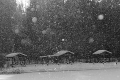DSC_7459 (Dmitry Mahahurov) Tags: nature snow winter russia mahahurov tosno
