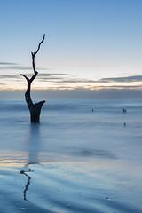 Bull Island 2/100 2017 Taken with the Sony a7ii. Topic 6: What belongs to tree but is not green? It's Trunk (Bikkogin) Tags: whwednesday week6 100xthe2017edition 100x2017 image2100 southcarolina bullislandferry caperomain sony a7ii usfishwildlife sunrise reflection 87365 new3652017 atlantic ocean longexposure tree boneyardbeach coastalexpeditions bullisland nationalwildliferefuge