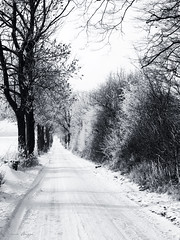 Winter in black and white (DameBoudicca) Tags: sweden sverige schweden suecia suède svezia スウェーデン lund linero tree träd baum arbre árbol albero 木 snow snö schnee nieve neige neve 雪 road väg weg route camino via 道 winter vinter invierno hiver inverno 冬 white vit weis blanco blanc bianco 白 arendala arendalagård shrub buske
