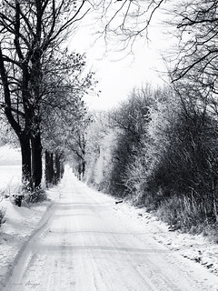 Winter in black and white
