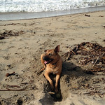 Dog, ball and sea (and hole) thumbnail