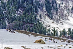Snow 9 ... (Bijanfotografy) Tags: nikon nikond800 nikon180mm28afd kashmir jk jammukashmir sonamarg snow mountainside mountains people