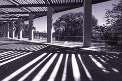 Morning shadows (mara.arantes) Tags: lines shadows light tree trees nature park digital monochrome pb parque geometric