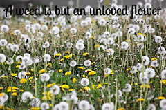 Playing with text (ThroughMyEyes_JKM) Tags: flower field grass outdoors spring weed quote dandelion
