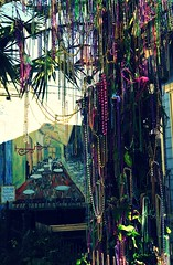 The Mardi Gras tree (RickAbbott) Tags: tree nature leaves beads neworleans mardigras