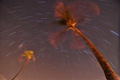 Hokulani (JN) Tags: trees night star hawaii nikon oahu trails palm tokina honolulu 16mm winds trade sway startrails d700 hokulani 1116mm 1116mmf28