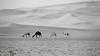 DSC00877 (Instagram x3abr twitter x3abrr) Tags: نار سيارة حيوانات السعودية حطب نيسان صحراء رمل شجر عدسة قرية ثعبان باترول سوني جيب القصيم سحلية كامرة زوم ثعابين الرربيعية الفا٥٧ alrrabieihpuebloqassim arabiasauditaserpienteárbolesdemaderadefuegodelaarenapatrullajeepnissankamrhsonyalpha57animalesserpienteszoomlagartolentedesierto