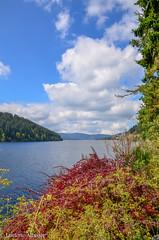 Schluchsee (albisserl) Tags: lake germany deutschland flora schwarzwald deu schluchsee badenwrttemberg