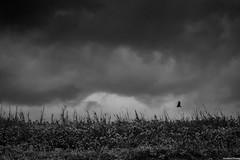 Trayectoria (Andres Olvera) Tags: sky costa beach nature canon mexico gris spring flickr escape exterior arte natural rica cielo mm dslr veracruz andres tajin olvera personaje blanconegro 18105 poza pozarica cumbre tumblr