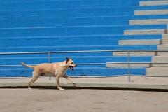 IMG_29590 (Max Hendel) Tags: dog canine cachorro canino dogslife canoneosdigital vidadeco vidadecachorro photobymaxhendel bymaxhendel fotografadopormaxhendel maxhendel photographedbymaxhendel pormaxhendel canoneosphoto photographermaxhendel maxhendelphotography