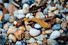 Where is the frog? (Thomas TRENZ) Tags: macro nature leaves animals closeup search stones laub natur deception pebbles frog steine camouflage makro frosch find nahaufnahme tier kiesel suche tarnung finden tuschung kieselstein suchspiel searchgame