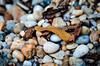 Where is the frog? (Thomas TRENZ) Tags: macro nature leaves animals closeup search stones laub natur deception pebbles frog steine camouflage makro frosch find nahaufnahme tier kiesel suche tarnung finden täuschung kieselstein suchspiel searchgame