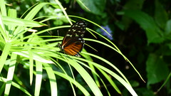 """Butterfly On Skinny Green Leaves 2 • <a style=""""font-size:0.8em;"""" href=""""http://www.flickr.com/photos/77994446@N03/9642890468/"""" target=""""_blank"""">View on Flickr</a>"""
