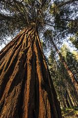 Yosemite (Joseph M. Campbell) Tags: california nature yosemitenationalpark nationalparks