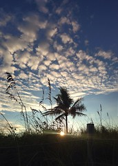 Blue dune dawning. (Andy Royston / Ft Lauderdale Sun) Tags: nature grass mobile palms dunes atlantic palmtrees palmtree fortlauderdale ftlauderdale seaoats southflorida iphoneography