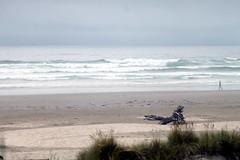 I felt the flow... (CMSi) Tags: ocean summer beach water grass person log sand waves september pacificocean