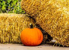 Pumpkin and Hay (jtillery) Tags: trees lake halloween water field pumpkin landscape countryside nikon scenic carve haystack hay ftworth hdr d600 lakeworth nikond600 ftworthnaturecenter readytocarve pumpkinandhay