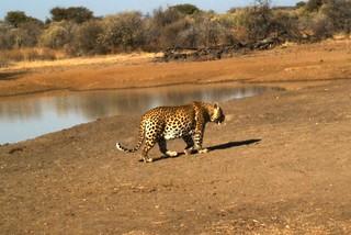 Namibia Safari - Lake Lodge 25