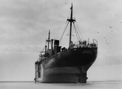 Vlieland - stranding ss Virgo - 1 februari 1953 (Dirk Bruin) Tags: hope vlieland ramp ship general cargo steam greece kathy beached monrovia stranded tramp virgo ick 1953 doeksen vliehors stranding maline berging rederij kooijman februaristorm vlielanders
