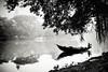 Untitled (Anirban Aurgha) Tags: street morning mist lake monochrome misty canon boat streetlife dhaka blacknwhite tamron bd bangladesh bnw sillhoute dhanmondi dhanmondilake ringexcellence dblringexcellence tplringexcellence eltringexcellence