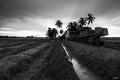 I'M DONE (my effendi) Tags: blackandwhite bw landscape nikon paddy cloudy machine wideangle tokina machinery lee malaysia bnw kedah paddyfield kualamuda harvesting apen tradisional effendi d90 gnd leefilter myeffendi effendimohdyusof