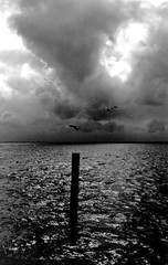 Souvenir IX (SAPhD.com) Tags: shadow sea sky blackandwhite bw seagulls beach nature water clouds analog dark lost meer wasser heaven solitude raw gulls natur himmel wolken baltic spooky sw anleger mwe kontrast ostsee schatten mwen dunkel ausblick seefahrt boltenhagen schwarzweis rauh mittelpunkt wohlenberg artinbw deraltemannunddasmeer saphd alwayswearyourcamera