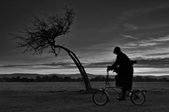 evening (zip po) Tags: ireland blackandwhite dublin tree monochrome mono evening photographer cyclist phoenixpark absoluteblackandwhite