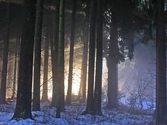 DSCN8230 mystisches Licht im Wald - mystical light in the forest (baerli08ww) Tags: winter mist fog forest germany deutschland nikon nebel natur wald mystic morningsun mystisch rheinlandpfalz morgensonne westerwald rhinelandpalatinate mygearandme mygearandmepremium mygearandmebronze mygearandmesilver mygearandmegold mygearandmeplatinum mygearandmediamond