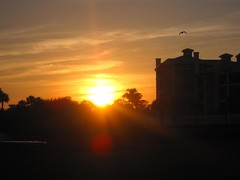 a florida sunset (ailie*) Tags: trees light sunset orange sunlight black building bird clouds dark evening flying shine bright florida silhouettes palm flare ailie