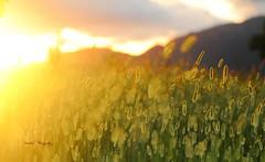 Sunset-II (Aadilsphotography) Tags: sunset canon