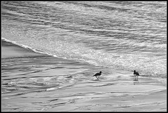 Oyster Catchers (spodzone) Tags: sea two blackandwhite bird art beach nature water lines weather composite composition manipulated lens landscape photography coast scotland spring sand dynamic emotion little unitedkingdom harbour space seasonal places calm diagonal communication equipment filter numbers zen oystercatcher coastline moment striking fleeting creatures simple toned pure contrasts portpatrick tranquil stacked turbulence contentment dumfriesandgalloway transience gbr krita painteffects rockstone digikam tonemapped landwater shapeandform rawconversion intimatelandscape sharpsoft enfuse simplecomplex darktable photivo digitalorange abstractqualities digitallowpass sony55210mm