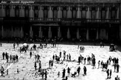 """""""Venice: museum"""""""