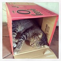 #แมวกล่อง #มากี่ทีนางก็หลับ #สาธิตมศว #สาธิตประถม #มาส่งของ #เข้าใจตรงกันนะ #เด๋วจะหาว่าไม่บอก #เมี๊ยว~  #ustoreatswu #uficonfamily